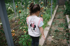 Girl in the tomato crop