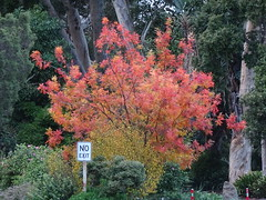 Red Tree Showing Off