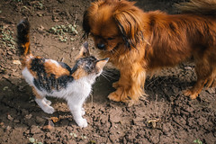 Curious cat and dog sniffing each other out