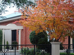 Autumnal Tree Competes with Red Brick
