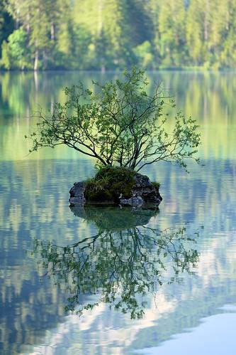 Bonsai - Lonely Little Tree on the Little Rock Island