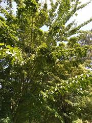 Parc Floral - Apremont-sur-Allier