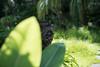 Photo:20200801 Hamanako Garden Park 5 By BONGURI