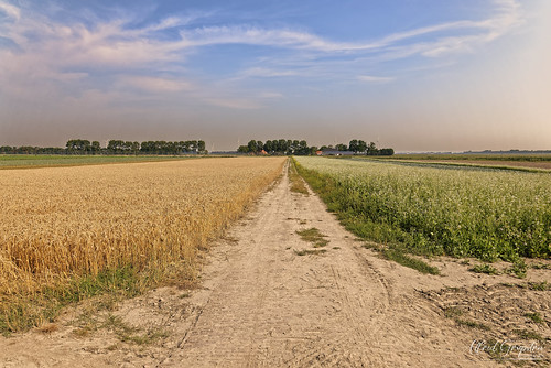 Heat And The Dry Dirtroad