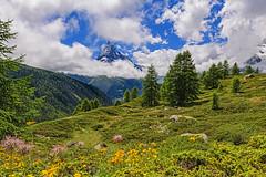Flowers and Matterhorn