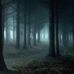 Black Forest [Baden]