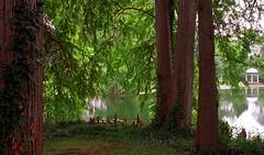 """Cincinnati - Spring Grove Cemetery & Arboretum """"DeCastro Memorial Through The Cypress Tree Trunks"""""""