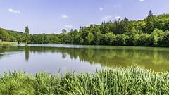 L'étang de l'Abbaye de Mortemer. (1)