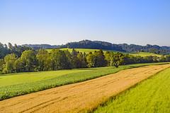Summer morning fields