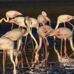 Aves en Villacañas. 13-8-2020
