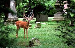 """Cincinnati - Spring Grove Cemetery & Arboretum """"I'm Busted.....Again"""""""