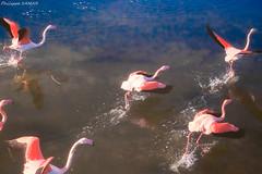 La course à Aigues-Mortes