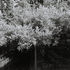 Film Monochrome