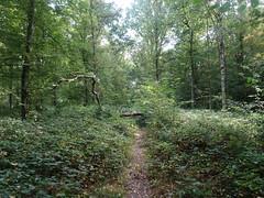 Forêt de Phalempin en 2020 (5)