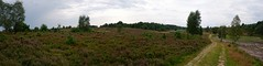 Heath panorama | August 1, 2020 | Lower Saxony - Germany