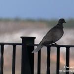 Aves en el Paseo del Norte de La Guardia (Toledo) 16-8-2020