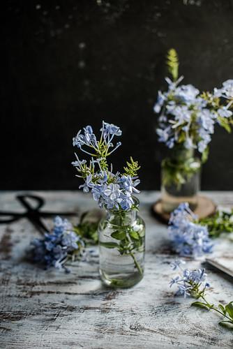 Blue flower still life
