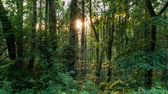 Hook Forest