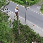 Ścinka sekcyjna świerków (widok z drona, W-wa)