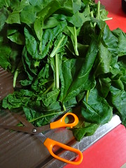 Time to Cut Spinach