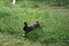 Toki chasing Flora