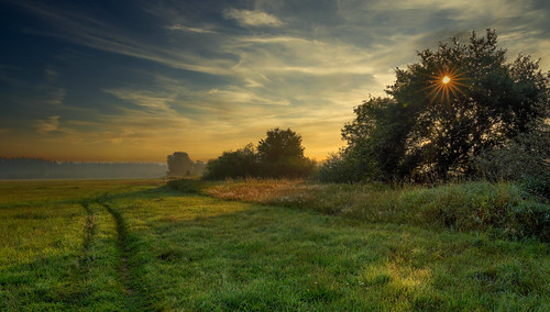 Early in the morning in the Wümme meadows