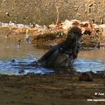 Aves en el Paseo del Norte de La Guardia (Toledo) 18-8-2020