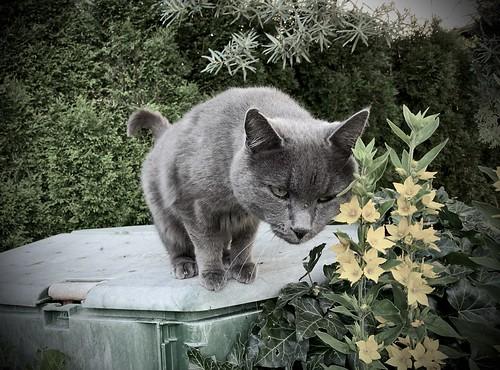 cat in the spot 😊 🐈