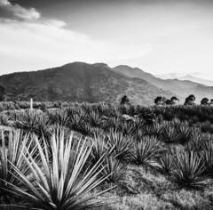 Mexico: Ars Electronica Garden