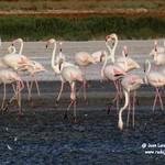 Aves en la laguna larga de Villacañas 18-8-2020