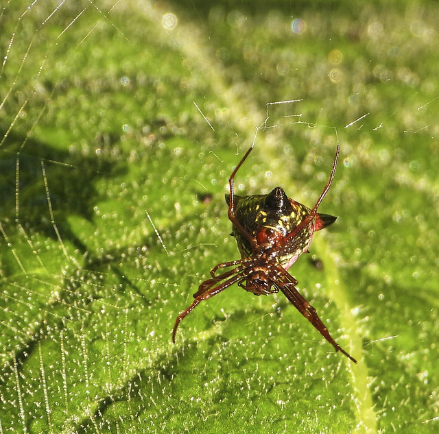 Photo:Spiny The Orb Spider By ☼☼Happy Autumn☼☼