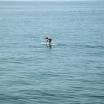 Santa Monica Covid Day Trip-204-2