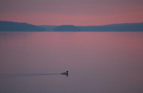 Aamun soutelija, IKs Kuukausi kilpailu