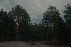 Тишина перед бурей / Silence before storm