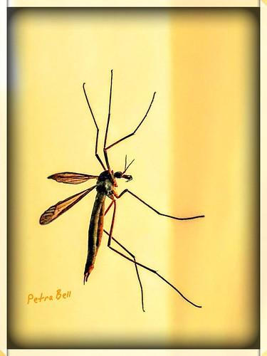 Filigree insect World