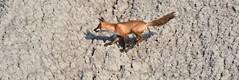 FOX PLAYGROUND, SCARBOROUGH BLUFFS ON CANADA, ACA PHOTO
