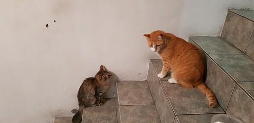Gatos e gatinhos - castração da Branquinha