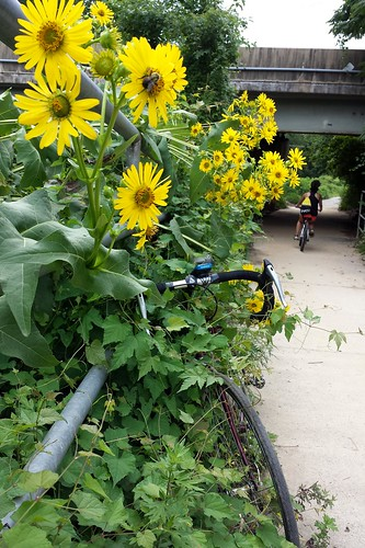 2020 Bike 180: Day 90 - Pollinators