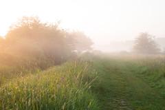 Morning in Ingendael