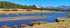 Tuolumne River, Forest and Domes, Yosemite 2019