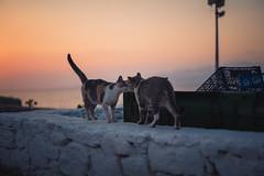Twilight Kiss in Mykonos