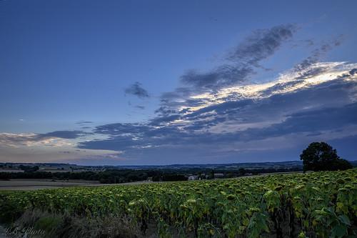 Sempeserre - Gers ( France)