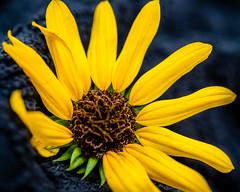 Nature's Yellow