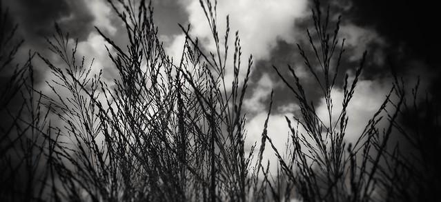 High, tall grass