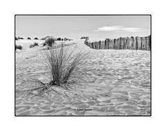 dunes sur la plage de l'Espiguette