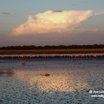Aves en la laguna larga de Villacañas 28-8-2020