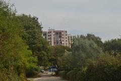 Kuća iza drveta (137FJAKA_4375)