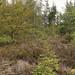 Natuurbegraafplaats'20E (14 van 20)