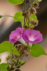 Fleurs et fruits Frères Stoeffler