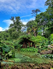 Water garden in Abbotsbury Subtropical Gardens 5